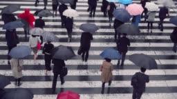 Japanese businessman walking with an umbrella