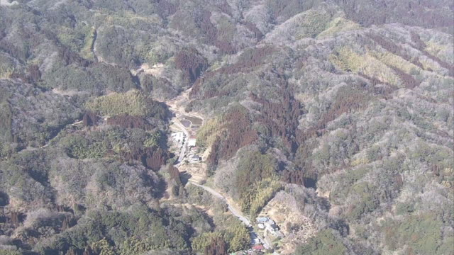 aerial, japanese cedar forest, chiba, japan - cedar stock videos & royalty-free footage