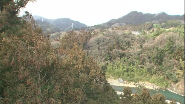 japanese cedar trees sway in the wind on ome hill in tokyo, japan. - cedar stock videos & royalty-free footage