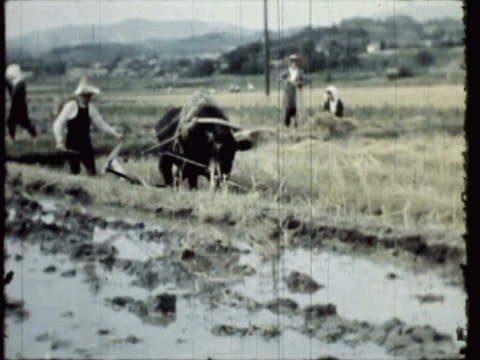 vídeos de stock, filmes e b-roll de ws ms pan japanese countryside, farmer working rice-fields / atami, japan / audio - rice paddy