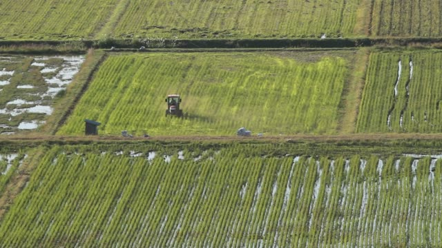 japanese farmer plowing rice field - satoyama scenery stock videos & royalty-free footage