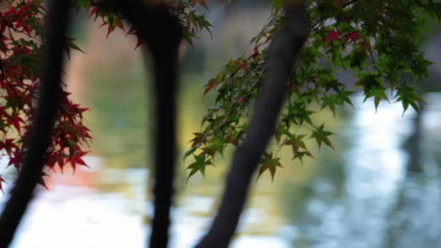 japanese garden, koko-en - videoato stock-videos und b-roll-filmmaterial