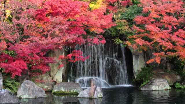 japanese garden, koko-en - season stock videos & royalty-free footage