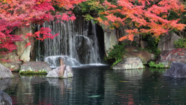 japanese garden, koko-en - oriental garden stock videos and b-roll footage