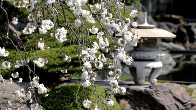 HD :日本庭園(ビデオ)
