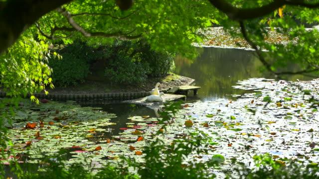 日本庭園 - 寺院点の映像素材/bロール