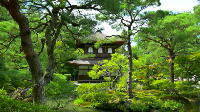 japanese garden - japan stock videos & royalty-free footage