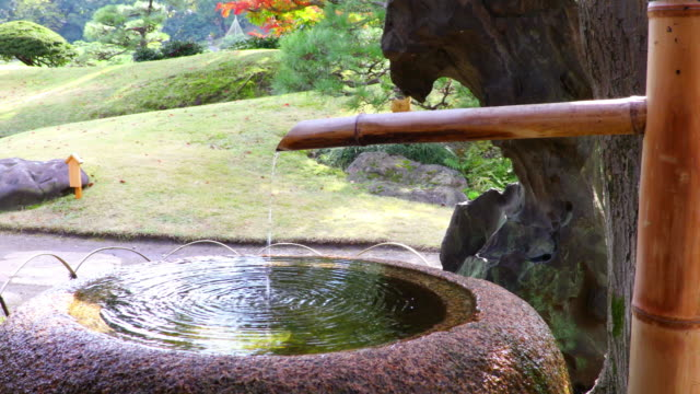 japanese garden - bamboo plant stock videos and b-roll footage