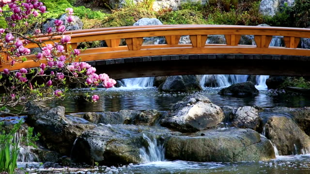japanese garden with bridge and waterfall - oriental garden stock videos and b-roll footage