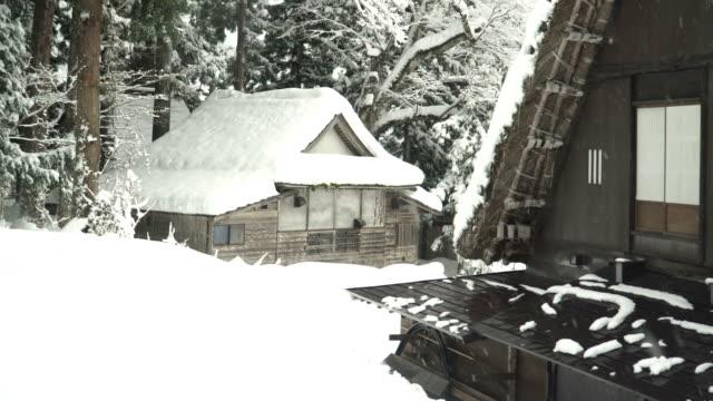 Japanese house belong to pine forest at Shirakawago village
