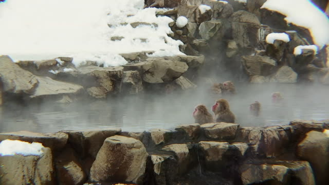 ws pan japanese macaques (macaca fuscata) sitting in hot spring / jigokudani, nagano prefecture, japan - hot spring stock videos & royalty-free footage