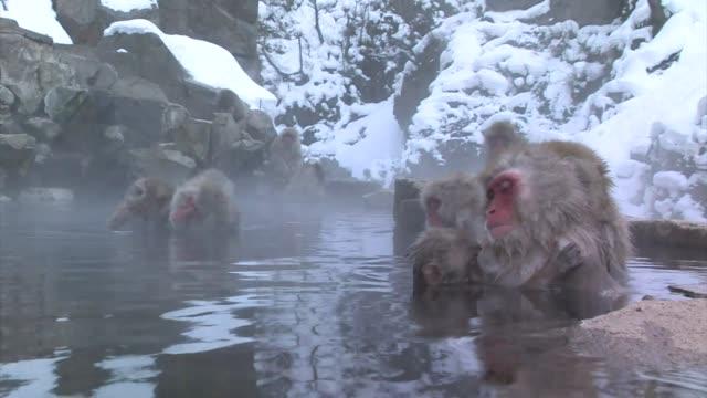 japanese macaques (macaca fuscata) - 温泉点の映像素材/bロール