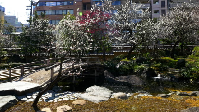 japanese plum and pond at yushima tenmangu shrine - shrine stock videos and b-roll footage