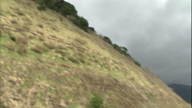 vídeos de stock e filmes b-roll de a japanese serow appears on the slope of a hillside. - vedação