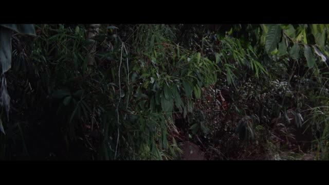 stockvideo's en b-roll-footage met ms pan japanese soldiers hurrying through tall grass / tokyo, japan - breedbeeldformaat
