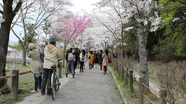 japanese tourists enjoying the cherry blossom, kyoto, japan - cappuccio video stock e b–roll