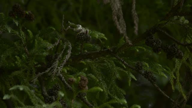 japanese tree frog climbs along branch, japan. - takashima shiga stock videos & royalty-free footage