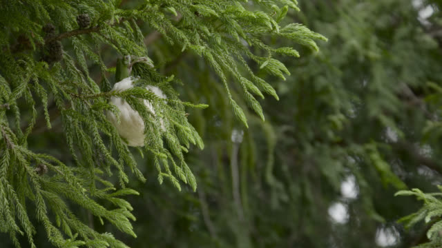 japanese tree frog makes foam nest, japan. - takashima shiga stock videos & royalty-free footage