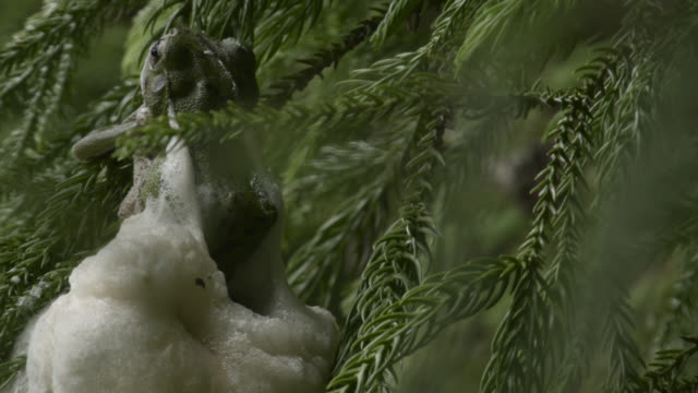 japanese tree frogs make foam nest, japan. - takashima shiga stock videos & royalty-free footage