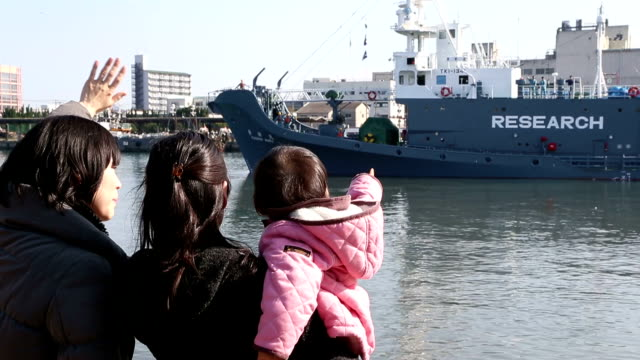 japanese vessels left a port in western japan on tuesday to resume socalled research whaling in the antarctic ocean for the first time since an... - valfångst bildbanksvideor och videomaterial från bakom kulisserna