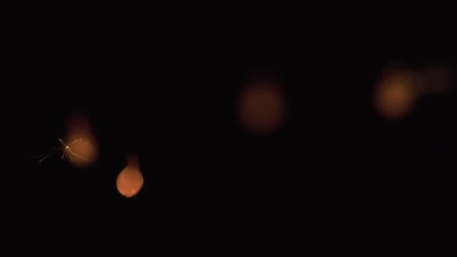 japan's fireworks / sparkler - 玩具花火点の映像素材/bロール