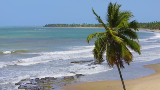 japaratinga beach in alagoas, brazil - northeastern brazil stock videos and b-roll footage