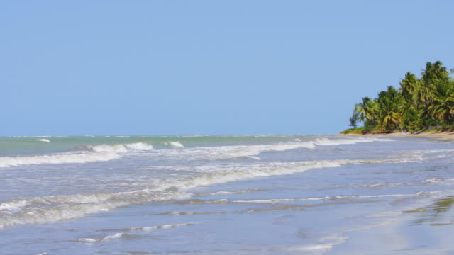 japaratinga beach in pernambuco - northeastern brazil stock videos and b-roll footage