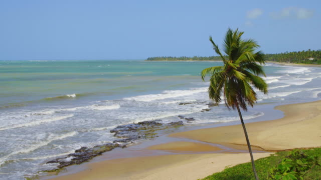 japaratinga beach - coconut palm tree stock videos & royalty-free footage