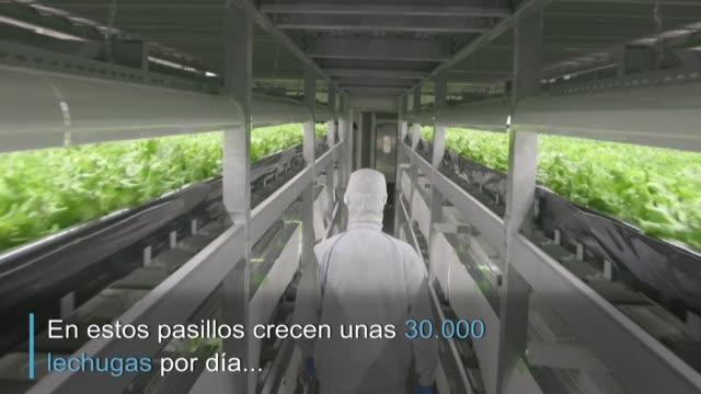 stockvideo's en b-roll-footage met japon crea fabricas de verduras para sustituir la agricultura en el campo despoblado y azotado por repetidas catastrofes naturales - agricultura