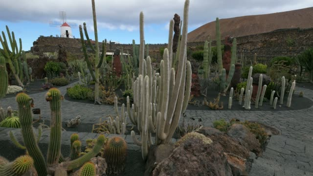 jardin de cactus (cactus garden) in guatiza, lanzarote, canary islands, spain, atlantic, europe - atlantic islands stock videos & royalty-free footage