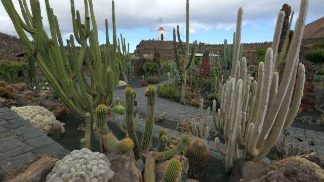 jardin de cactus (cactus garden) in guatiza, lanzarote, canary islands, spain, atlantic, europe - atlantic islands stock videos & royalty-free footage