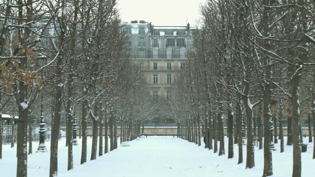 WS Jardin des Tuileries during winter / Paris, Ile de France, France