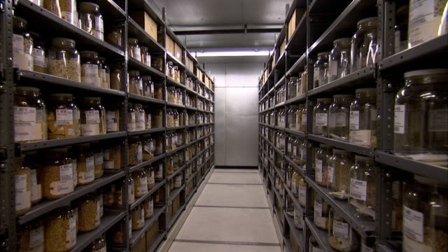 jars of grains line shelves in a warehouse. - jar stock videos & royalty-free footage