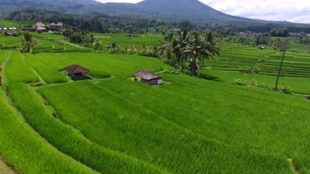 vidéos et rushes de jatiluwih rice terraces, bali, indonesia - rizière