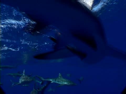 vídeos y material grabado en eventos de stock de jaws - atolón bikini