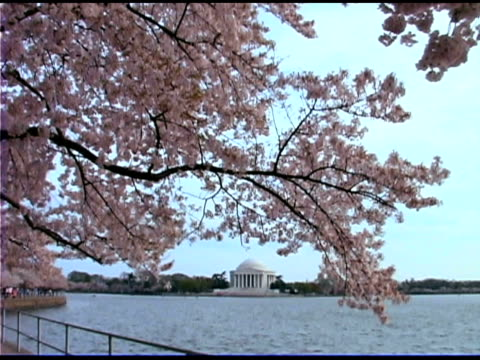 jefferson memorial across lake - laubbaum stock-videos und b-roll-filmmaterial