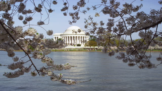 vidéos et rushes de jefferson memorial and cherry blossoms in washington dc - jefferson memorial