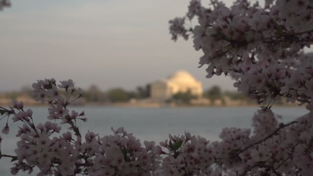 jefferson memorial out of focus in background - jefferson national expansion memorial park stock videos & royalty-free footage