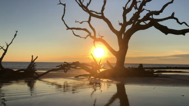 stockvideo's en b-roll-footage met jekyll island sunrise - drijfhout