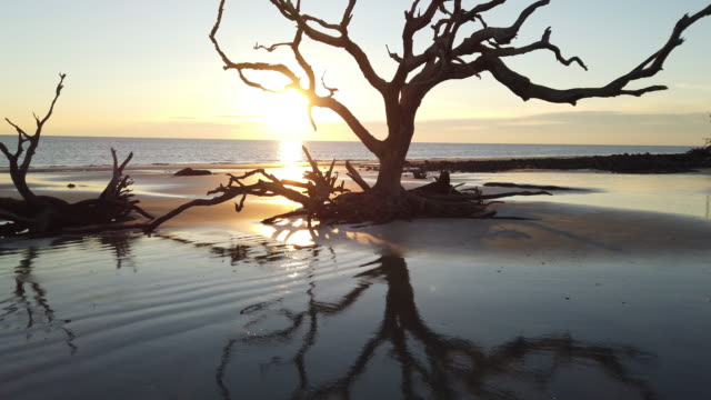 stockvideo's en b-roll-footage met jekyll island - drijfhout