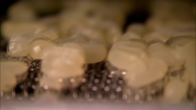 vídeos de stock e filmes b-roll de jelly beans move along a conveyor that vibrates. - coinfeitos