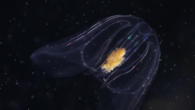 Jelly Fish 4K