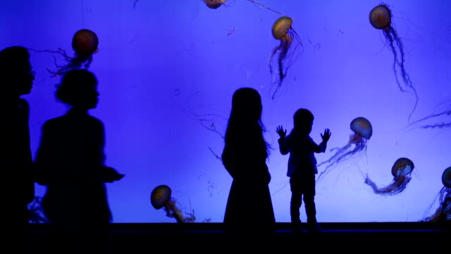 jelly fish in big aquarium with silhouettes of people - aquarium stock videos & royalty-free footage