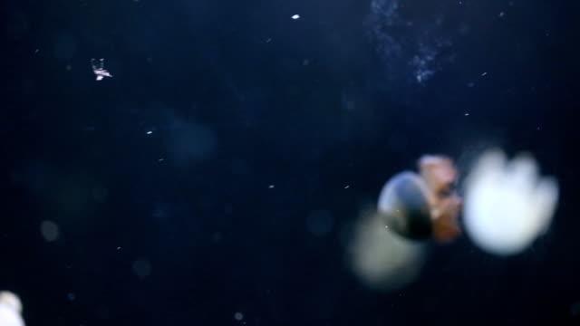 jelly fish in deep blue ocean - aquatic organism stock videos & royalty-free footage