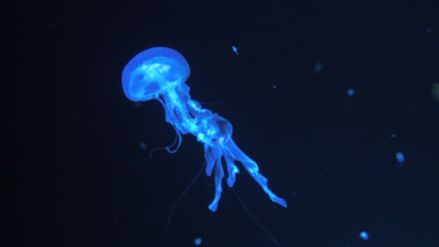 jelly fish - tentacle stock videos & royalty-free footage