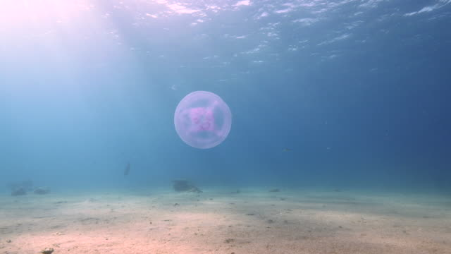 stockvideo's en b-roll-footage met jelly fish - documentairebeeld