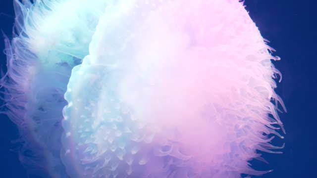 jellyfish in aquarium - aquatic organism stock videos & royalty-free footage