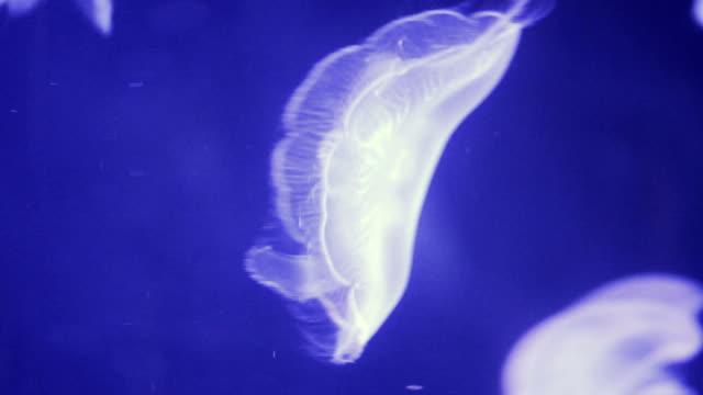 jellyfish in the sea - invertebrato video stock e b–roll