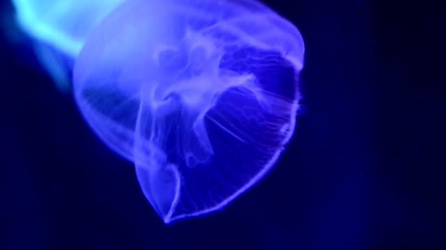 jellyfish in the sea - parte del corpo animale video stock e b–roll