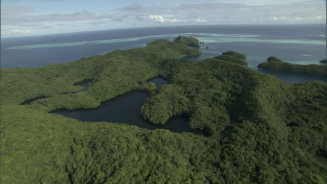 jellyfish lakes on forested island, palau - palau stock videos & royalty-free footage